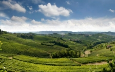 the-best-piedmont-wines-barolo-and-barbaresco